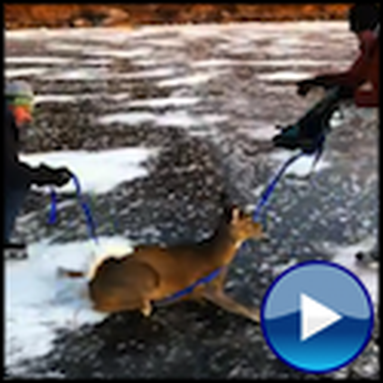 Two Men Save a Deer Trapped on a Frozen Pond