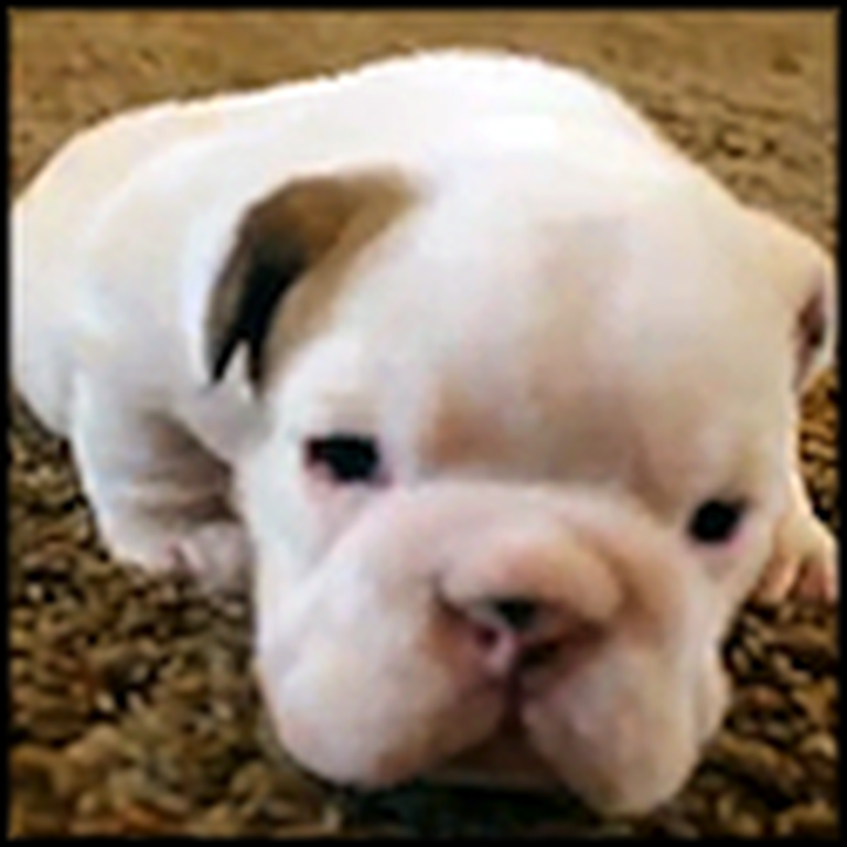 The Most Adorable Puppies Ever Take Their First Steps