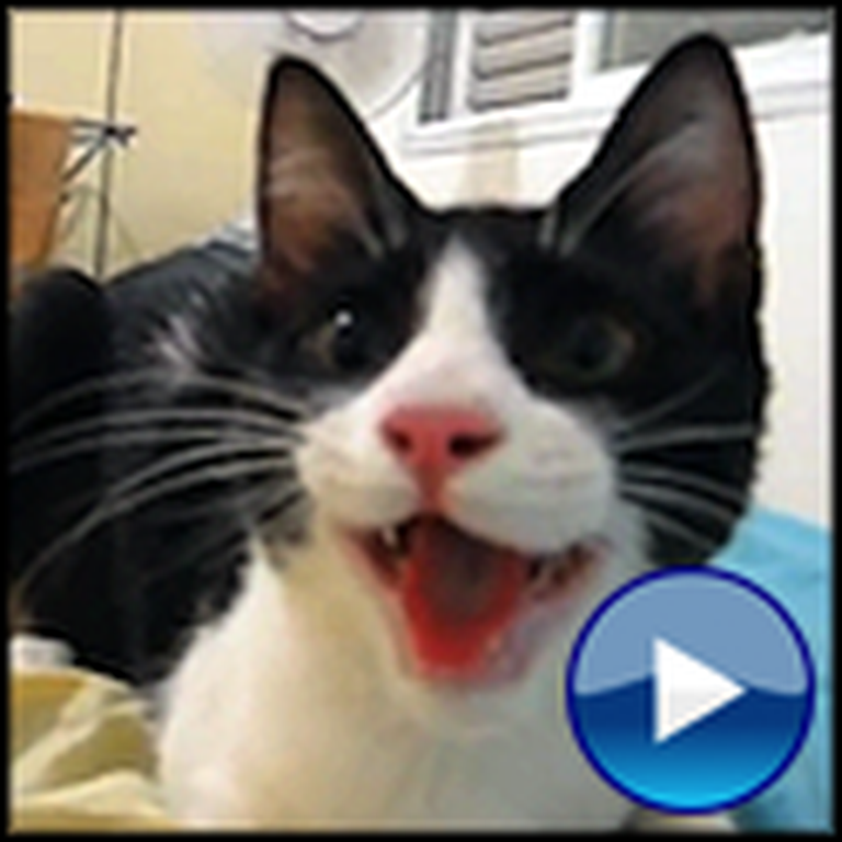 Cutest Cat Thinks He's a Dog - Guaranteed to Make You Smile