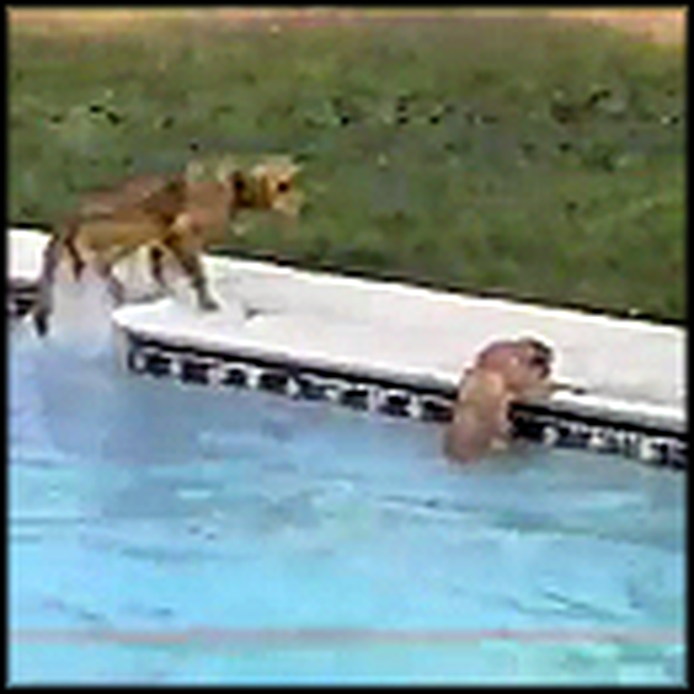 Amazing Dog Saves Her Puppy From Drowning in a Pool