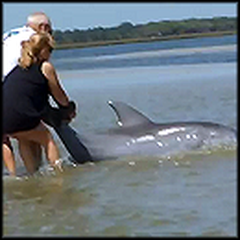 Family in Florida Saves a Stranded Dolphin