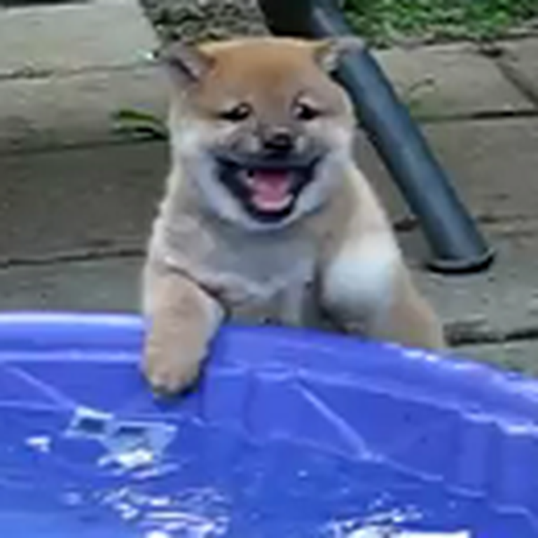 Puppy Discovers Water for the First Time - LOL Watch What He Does
