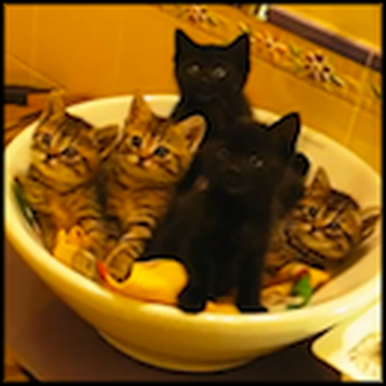 A Bowl of Synchronized Kittens to Make You Smile