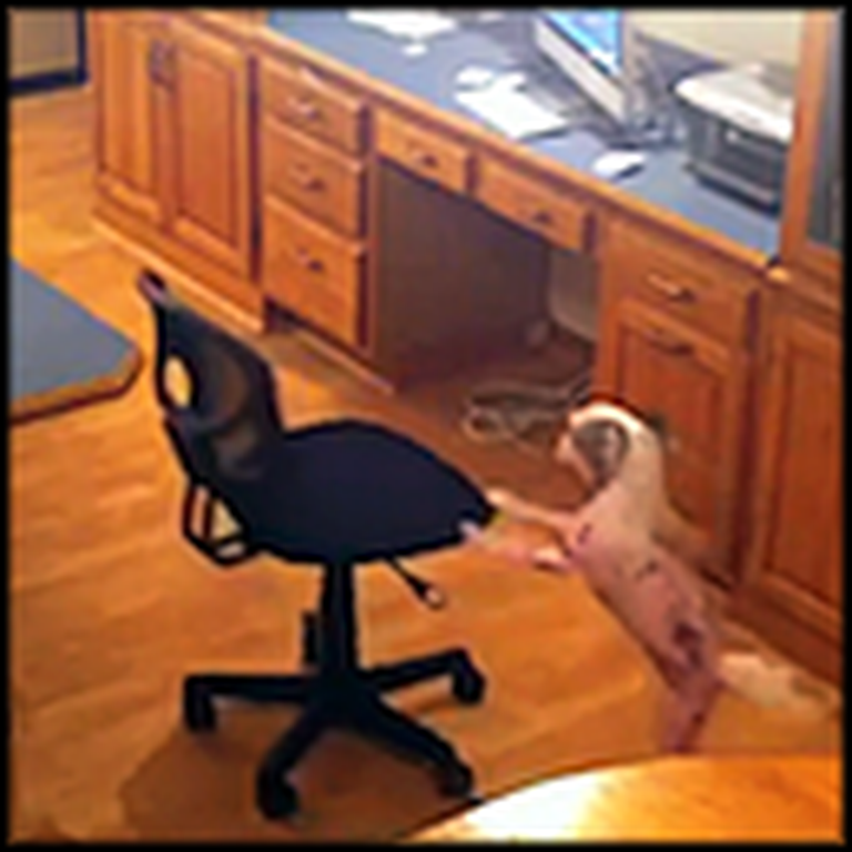 Smart Dog Figures Out the Most Clever Way to Get on the Table