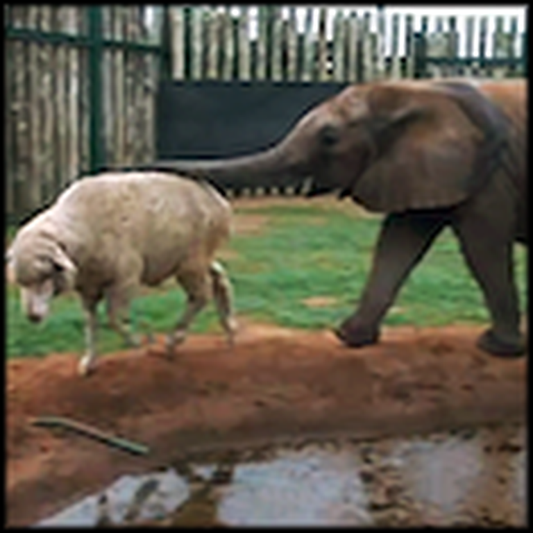 An Unlikely Friendship Saves a Life - Beautiful Video