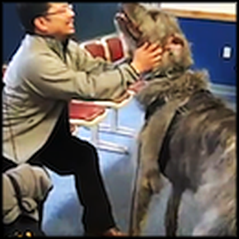 A HUGE Dog is as Excited as a Puppy to See His Daddy