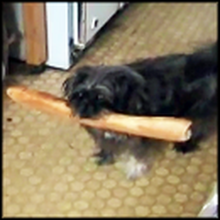 Baguette Thief Gets Busted in the Cutest Way Possible