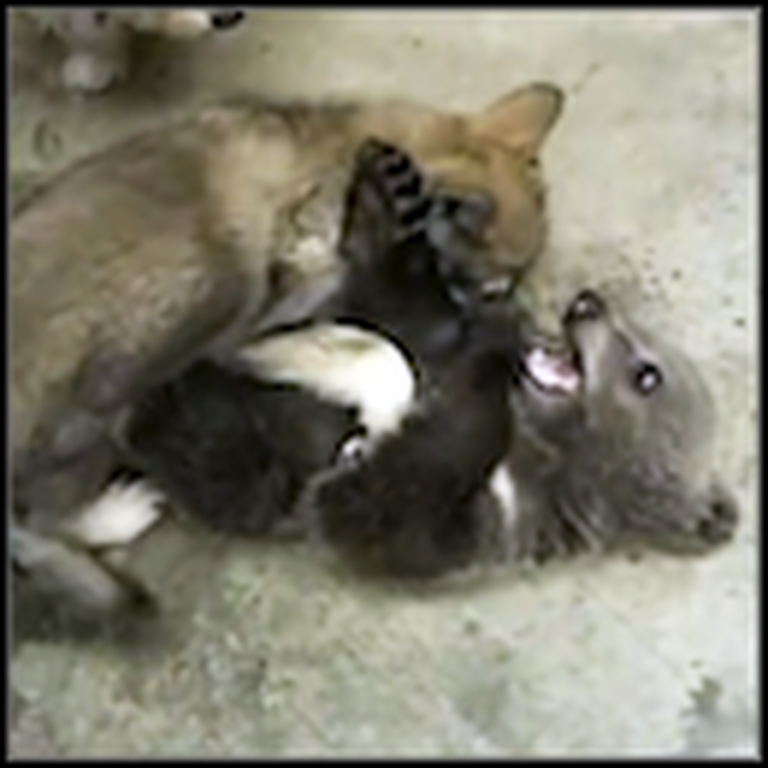 Adorable Bear Cub and Wolf Cub Become Best Friends