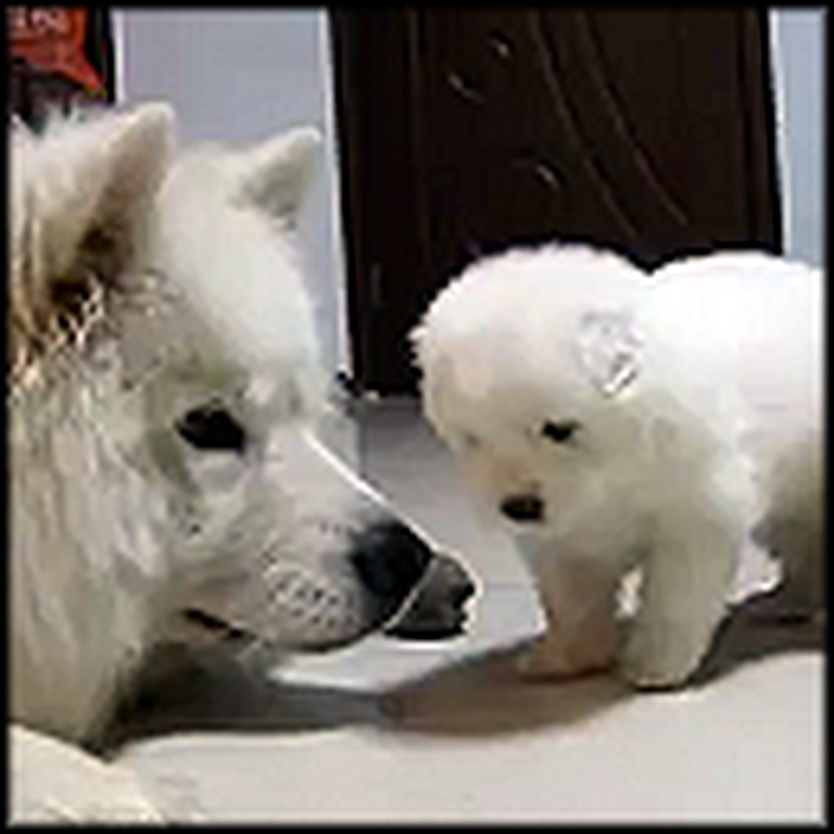 The Most Adorable Puppy Ever Gets to Know Mommy