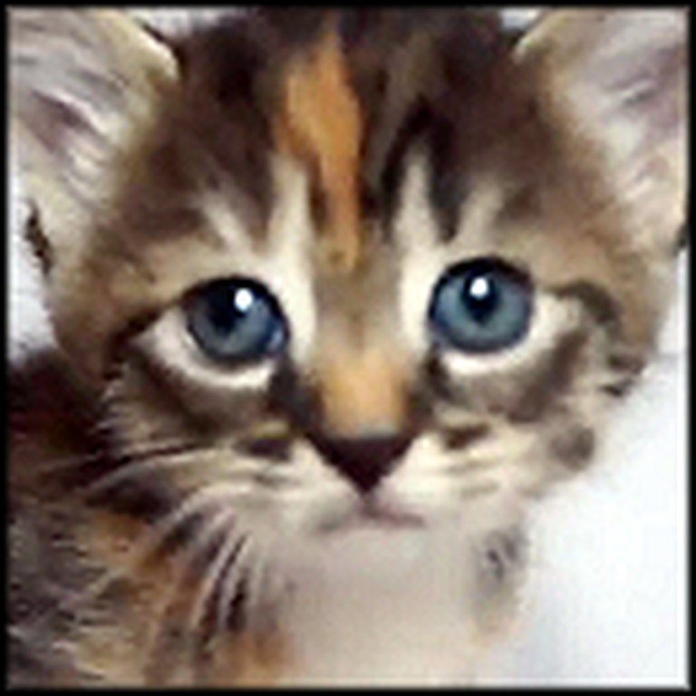 The Cutest Little Kitten Ever Just Wants Your Attention