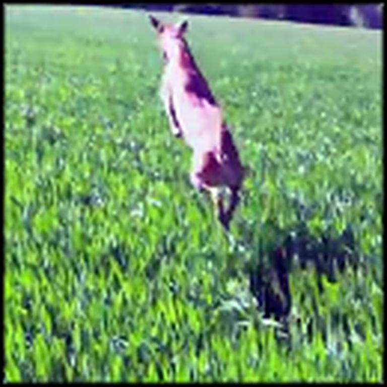 The Happiest Dog Ever Jumps Like a Kangaroo