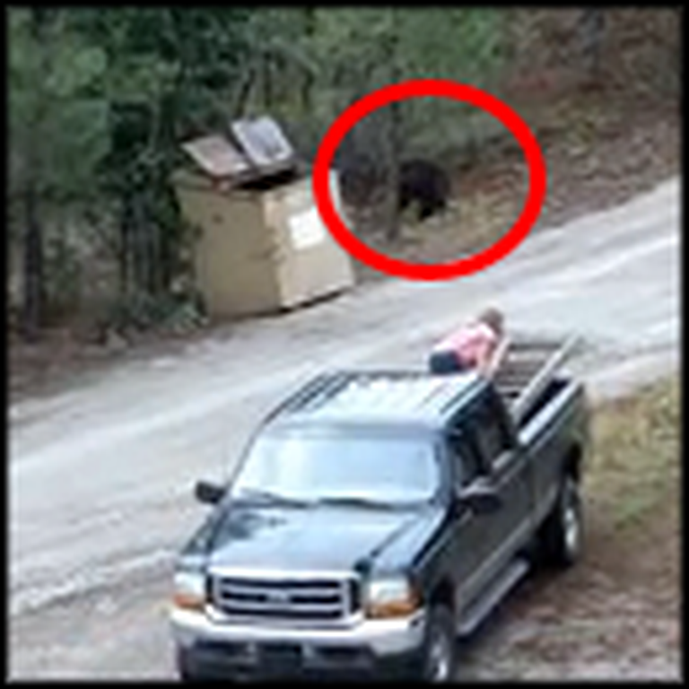 Brave People Rescue Cubs as Mama Bear Watches