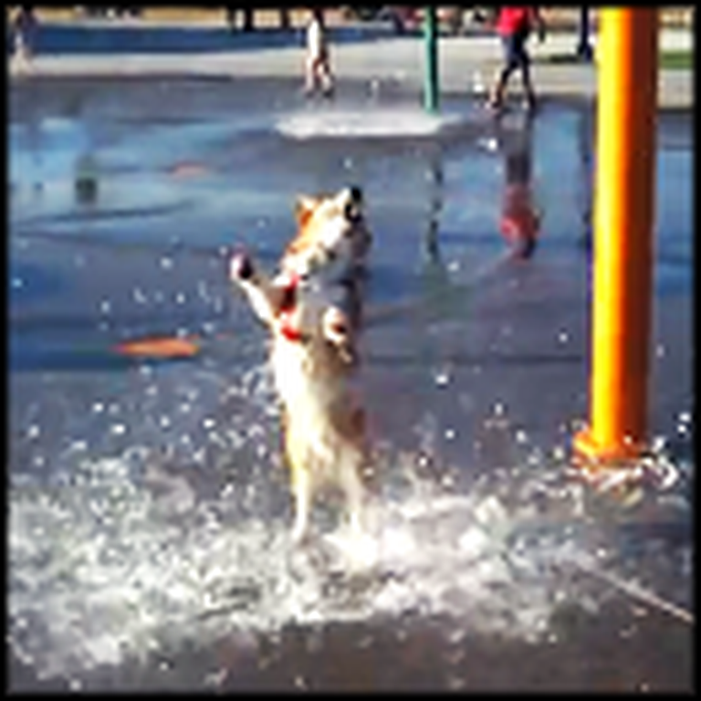 Happy Corgi Has the Time of His Life at the Waterpark