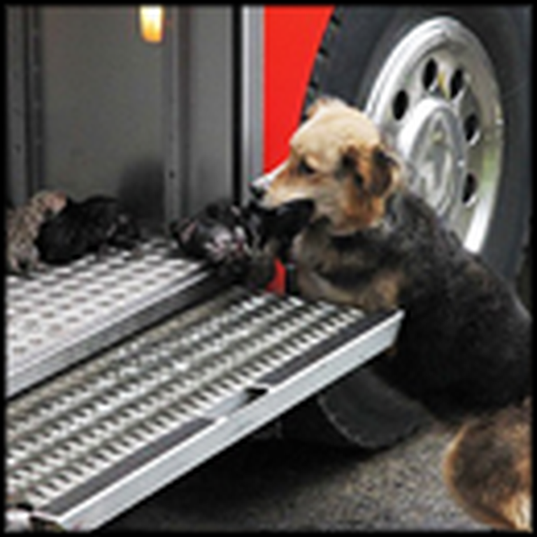 Mother Dog Risks Her Life to Save Her Babies From a Fire