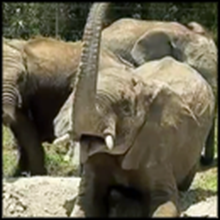 Baby Elephants That Lost Their Parents Get Rescued