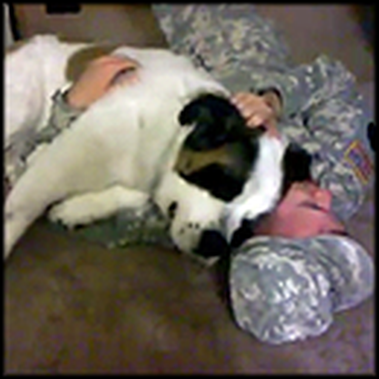 Huge St Bernard Gives a Loving Welcome Home to Daddy