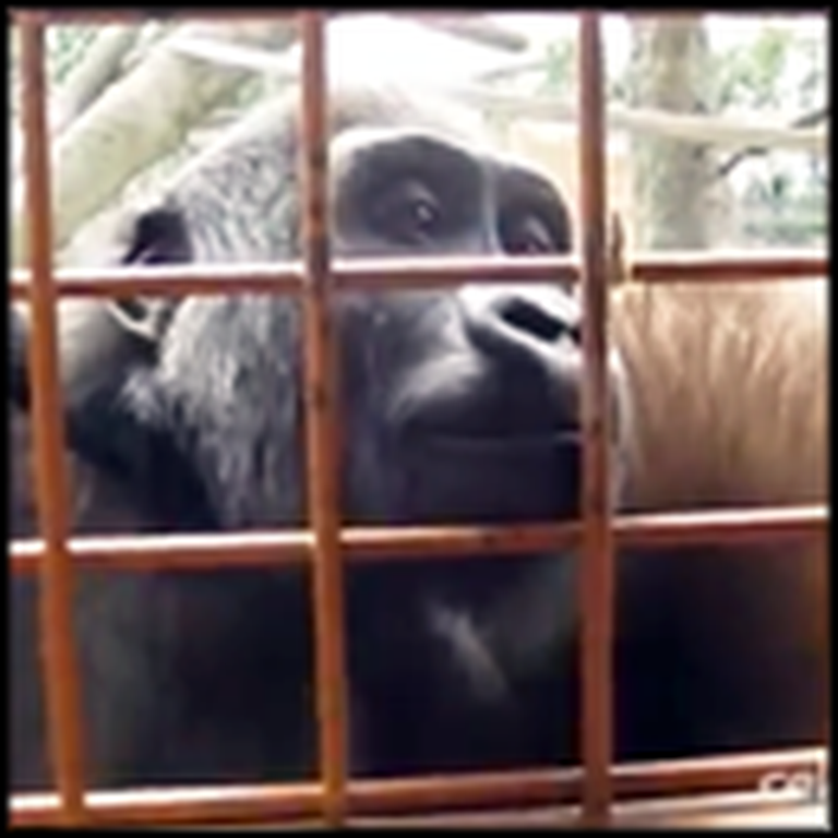 Curious Gorillas are Captivated by a Caterpillar - Adorable