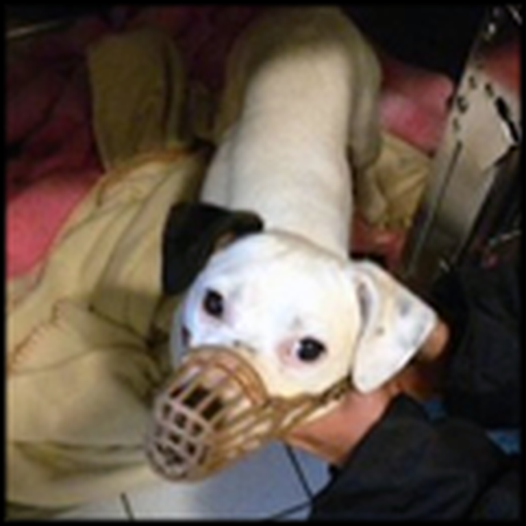 A Miracle Dog Cheats Death - You HAVE to See This!