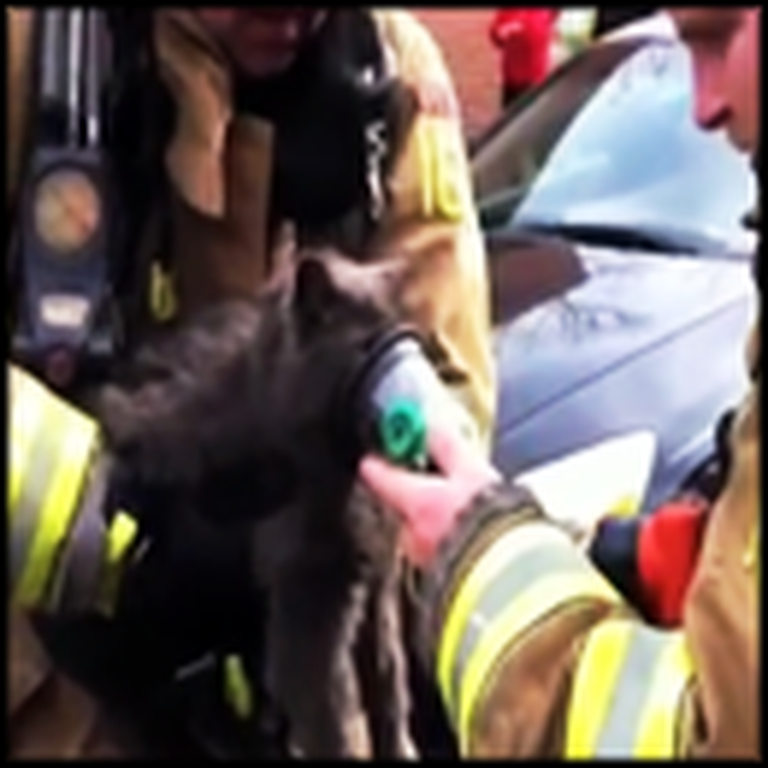 Two Firefighters Heroically Save a Cat from a Burning Home