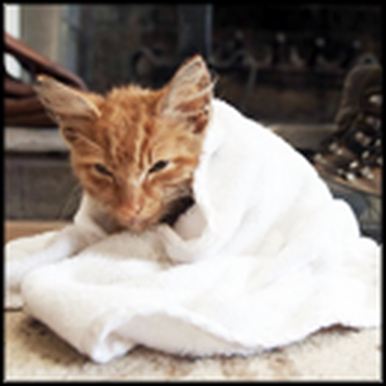 The Amazing Rescue and Recovery of Cheeto the Dying Stray Cat