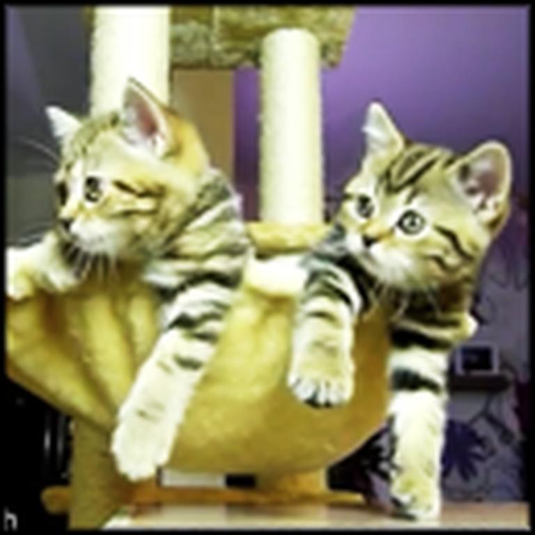 Cute Kittens Watching Tennis - Aww