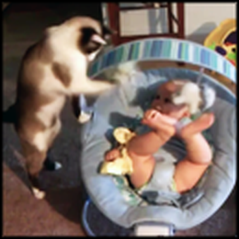 Kitty Makes Excellent Babysitter - the Baby Loves It