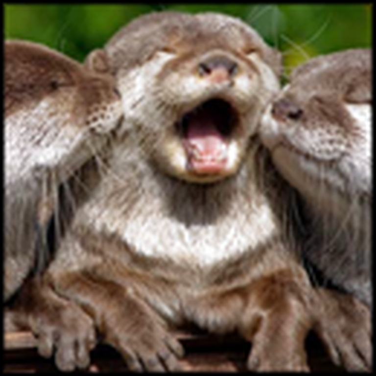 Group of Excited Otters are Just Too Cute