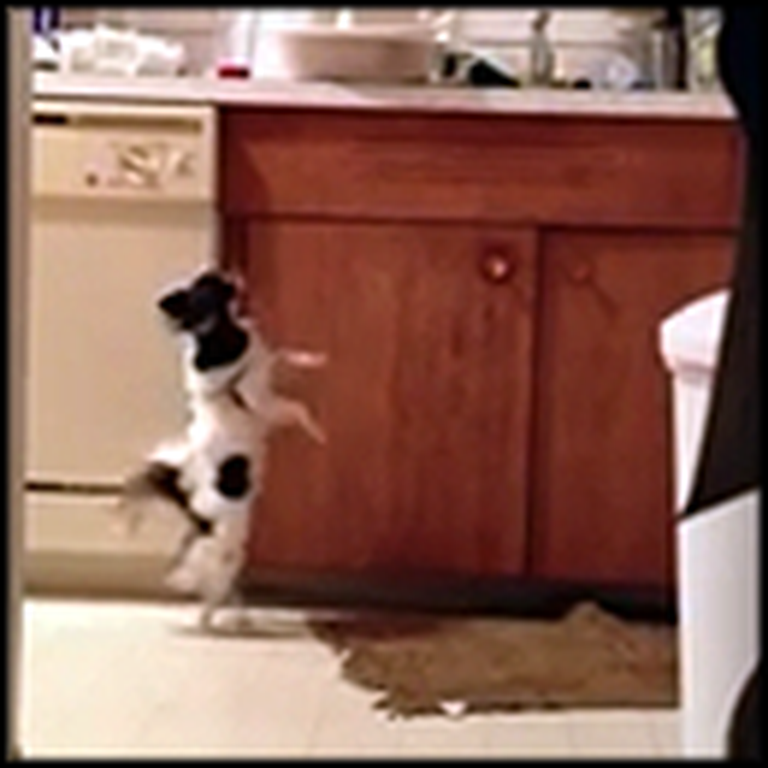 Happy Dog Will Do Anything for Leftovers - Even Dance