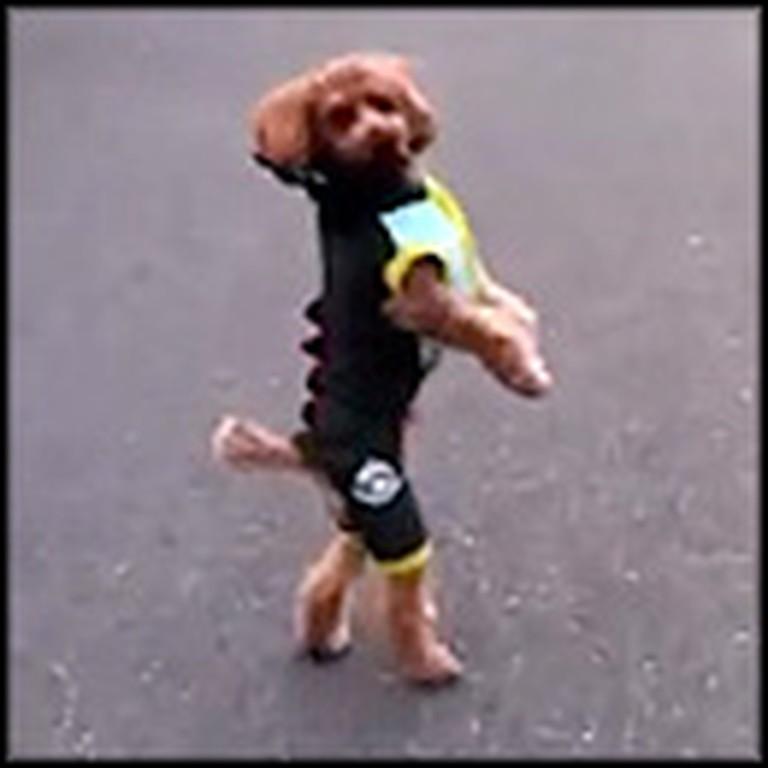 Dog Amazingly Walks on Two Legs