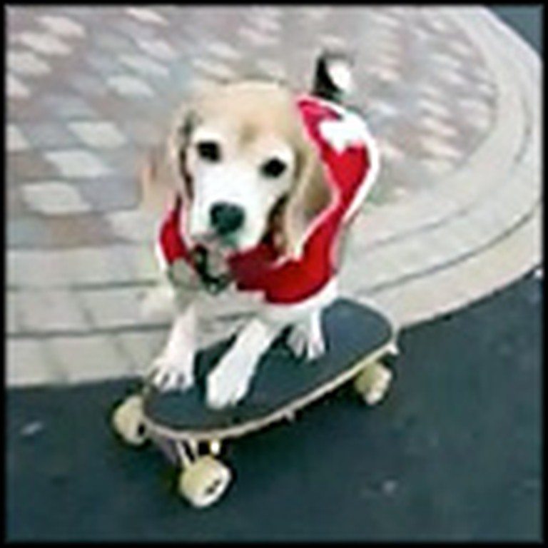 Adorable Santa Doggie Does Something So Cute