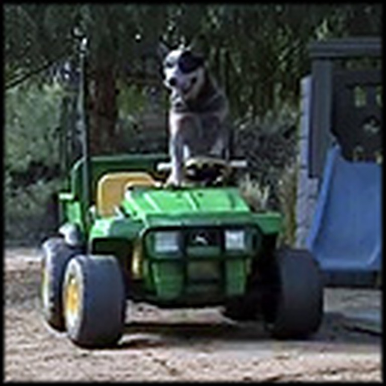Incredibly Smart Dog Drives Powerwheels Car All By Himself