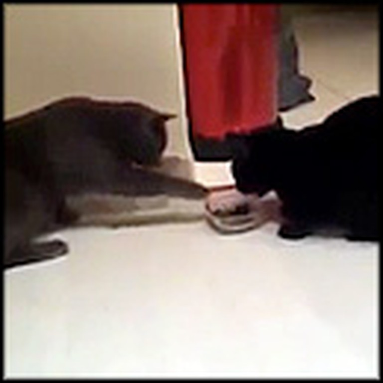 2 Adorable Cats Take Turns Eating Out of 1 Bowl