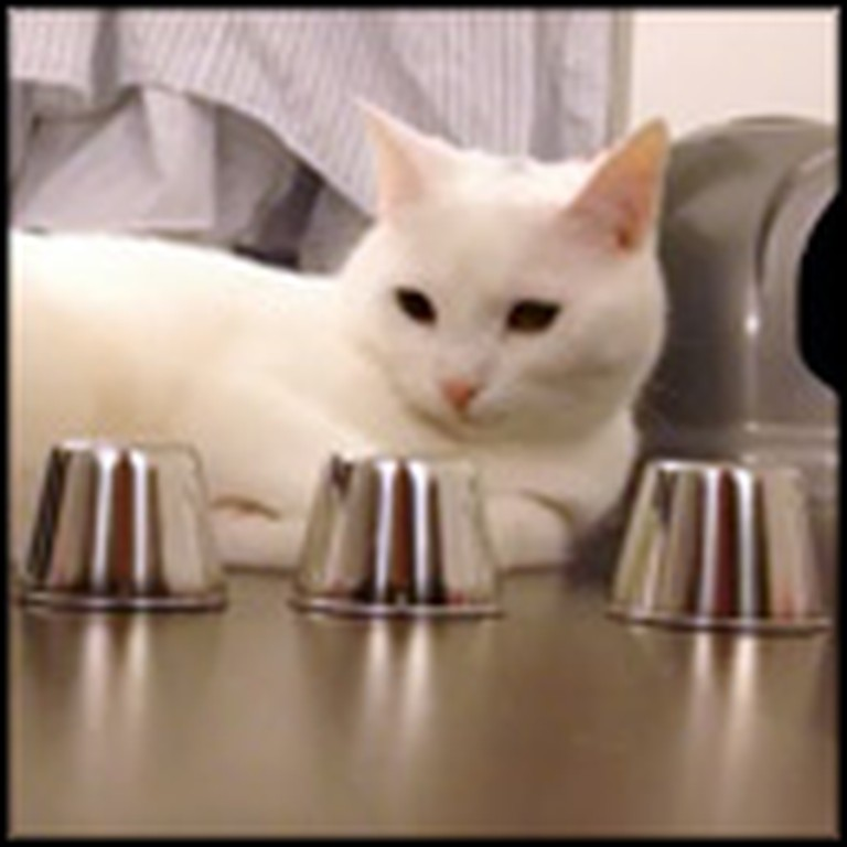 Smart Cat Has the Most Amazing Trick
