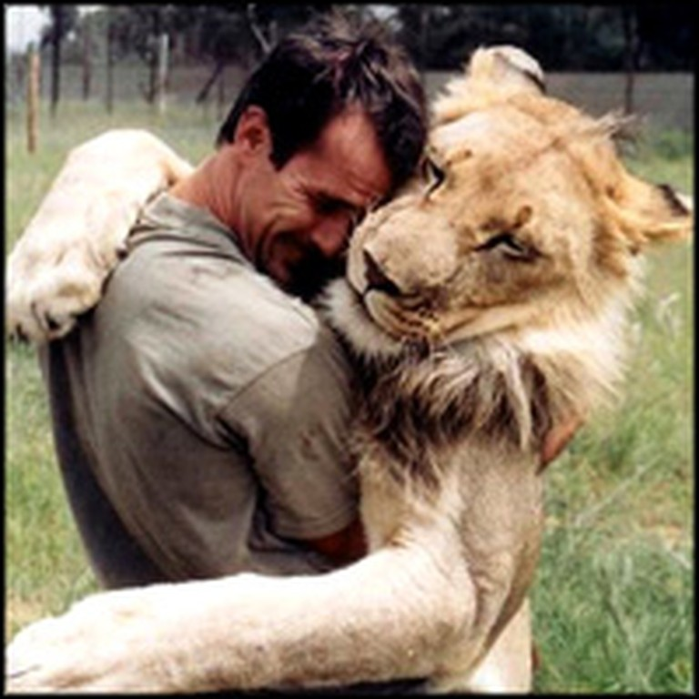 38 Wild Lions Shockingly Accept One Man as Part of Their Pride