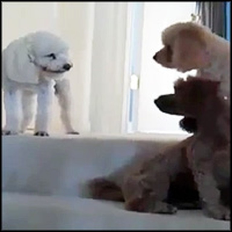 Very Guilty Dog Does the Funniest Thing