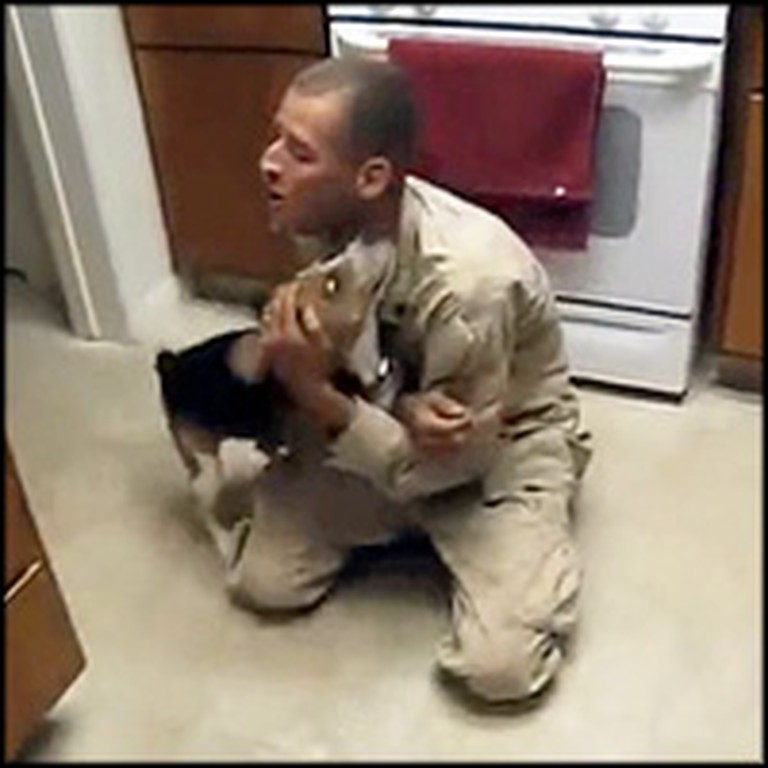 Loving Beagle Goes Crazy When his Soldier Owner Comes Home