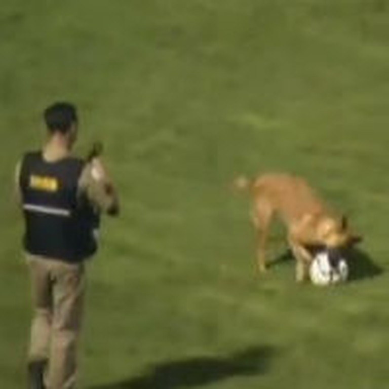 Something Awesomely Cute Happens in the Middle of a Soccer Game