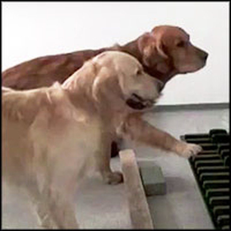 2 Dogs Play Piano Perfectly on Pitch