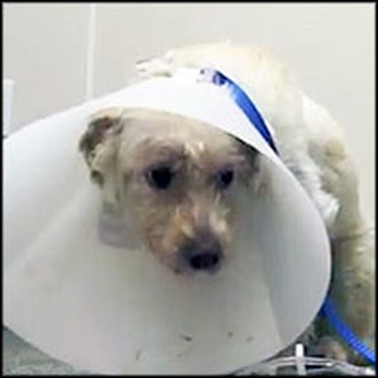 Kind People Heal a Dog's Broken Back and Wounded Spirit