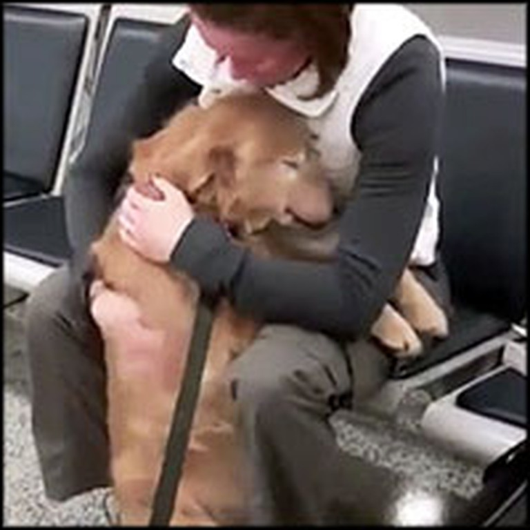 Best Compilation of Soldier and Dog Reunions on the Internet