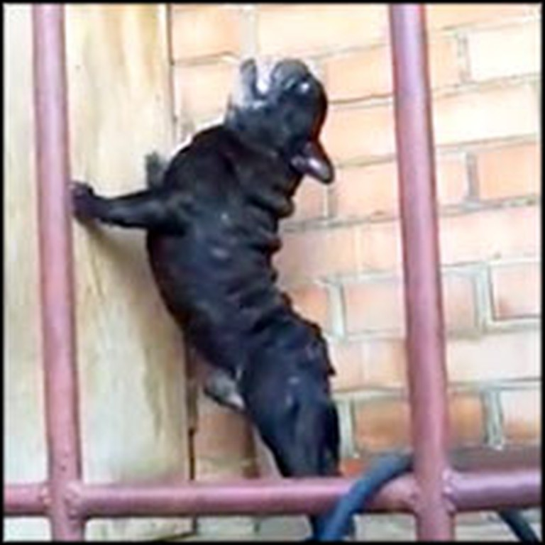 Little Dog Has the Most Unusual and Funny Bark