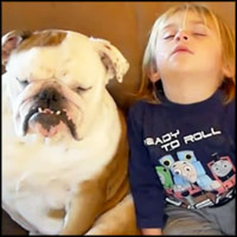 Adorable Bulldog and Toddler Drifting to Sleep at the Same Time