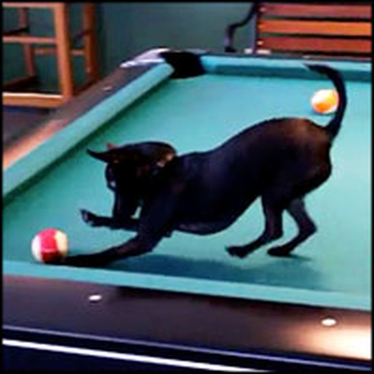 Incredibly Happy Puppy is a Pro at Playing Pool