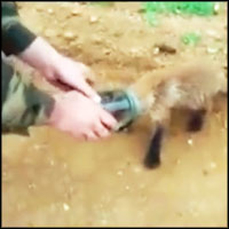 Suffocating Baby Fox Goes to Soldiers for Help