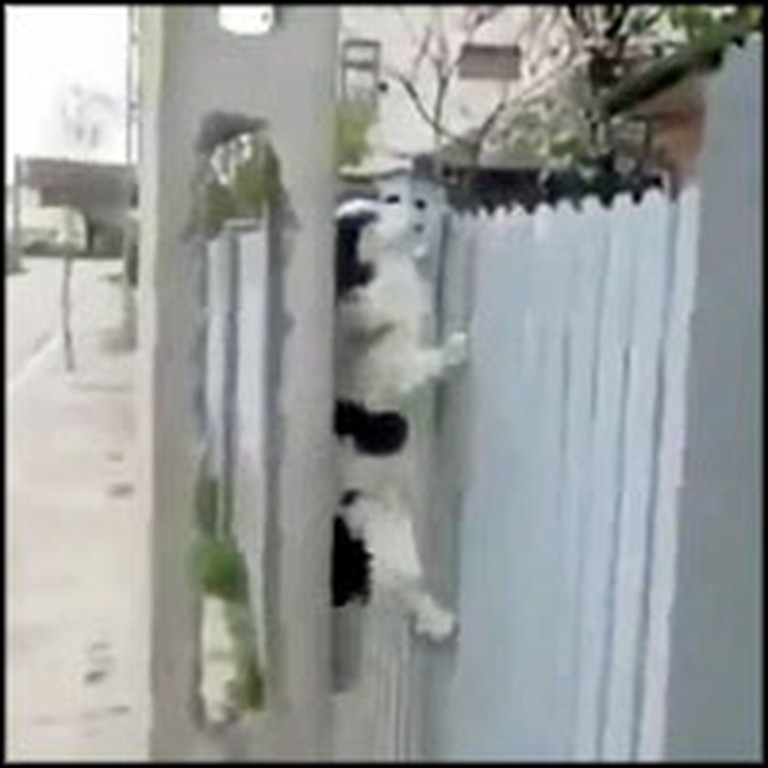 Mission Impawsible Dog Does Something Crazy to Escape