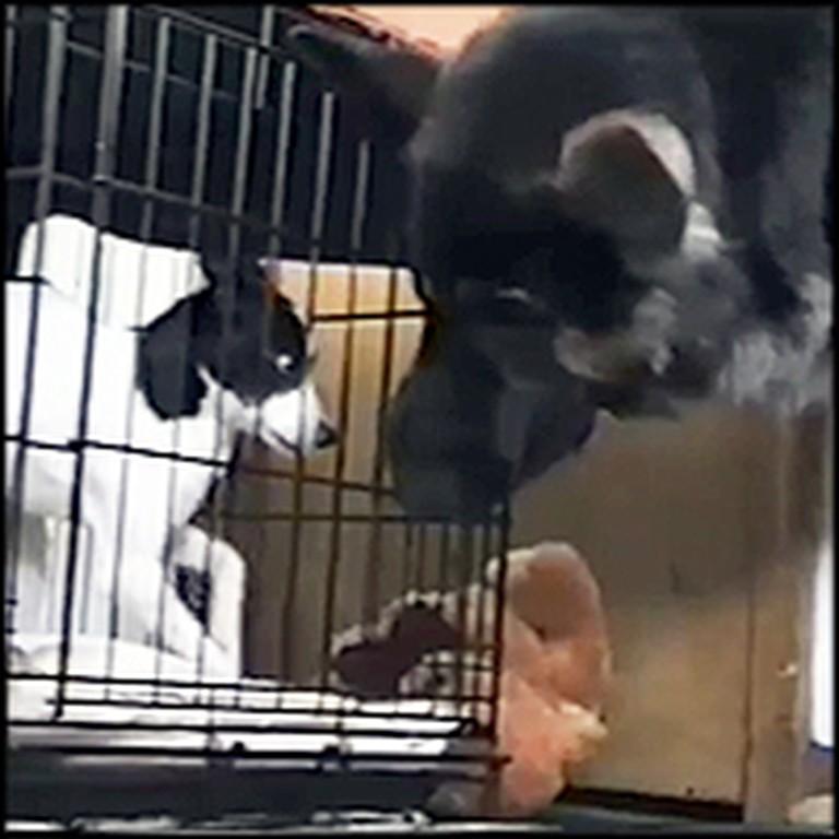 Clever Dog Helps His Pal Escape from Crate
