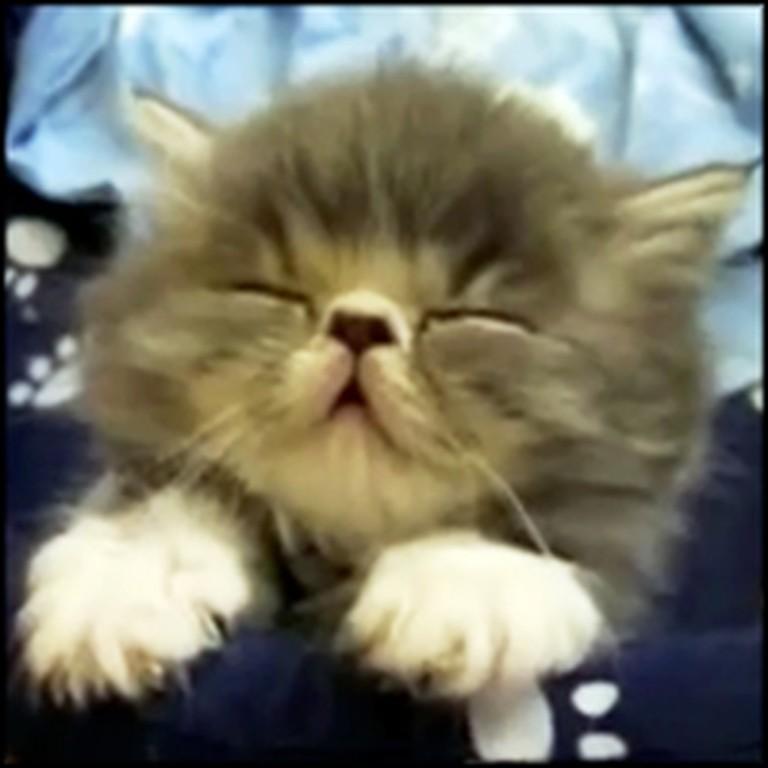 10 Cutest Sleepy Pets on the Internet