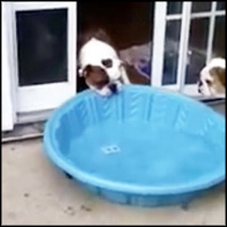 Clever Bulldog Loves Swimming... So He Tries to Take the Pool Inside