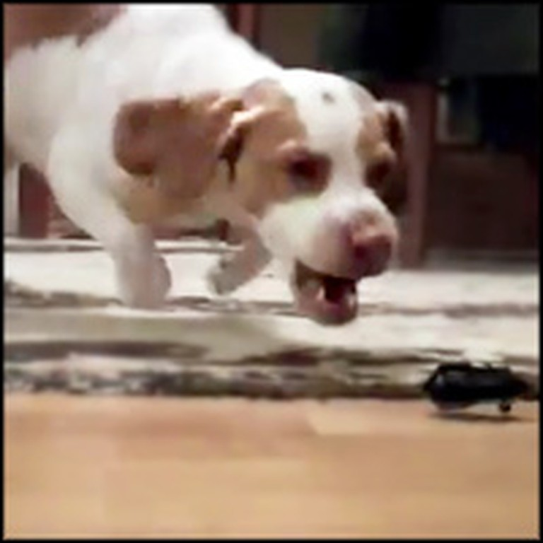 Super Playful Dog Loves the Strangest Toy - He Goes Nuts For It