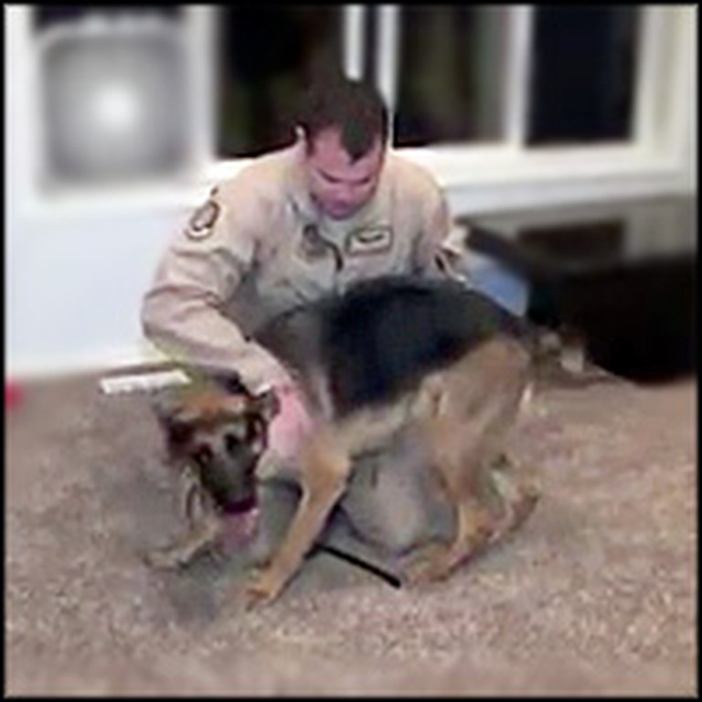 German Shepherd Can't Contain Her Joy When Her Soldier Comes Home